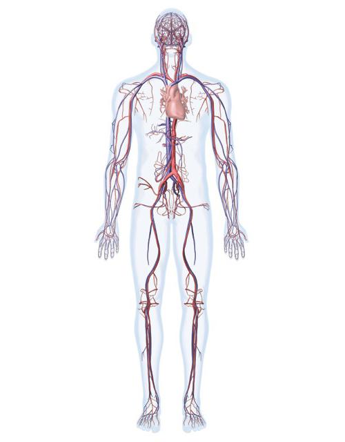 AnatomyMan-003
